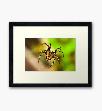 Macro Spider Framed Print