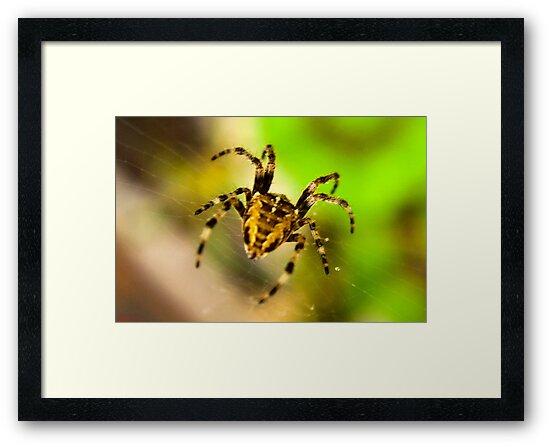 Macro Spider by Trevor Kersley