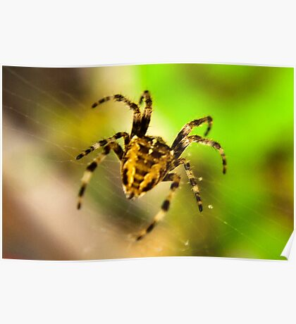 Macro Spider Poster