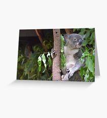 Calm Koala Greeting Card