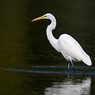 Light Bright White Egret  by Daniel  Parent