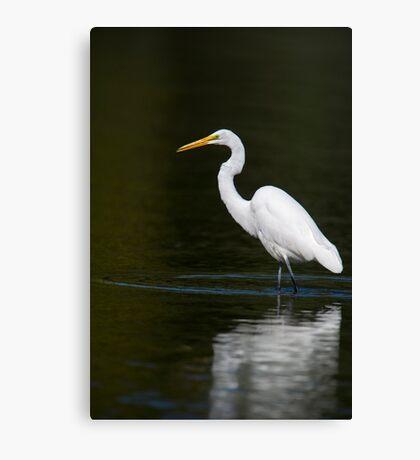 Light Bright White Egret  Canvas Print