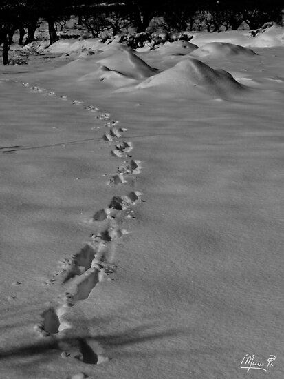 Following in the footsteps by marcopuch