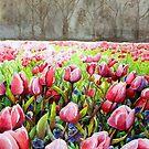 Tulips In Pink by BaVincio