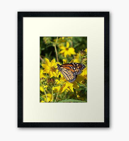 Monarch's Gold 1 Framed Print