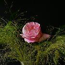 Last Rose of Summer by Gilberte