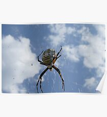 Garden Spider II Poster