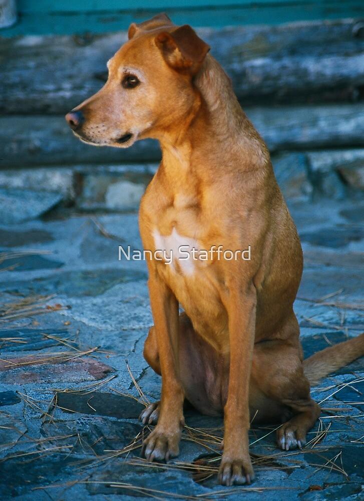 Foxie Roxie by Nancy Stafford