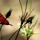 Crazy Buterfly at the Sane Garden by Roberto Nogueira