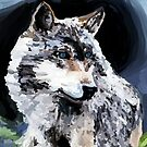 A wolf by irisgrover