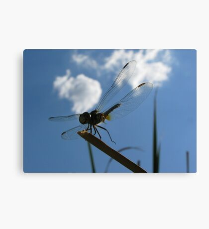 Dragonfly High  Canvas Print