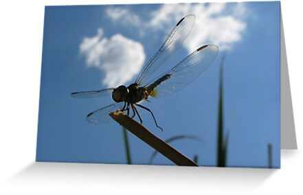 Dragonfly High  by Kimberly Chadwick