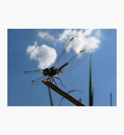 Dragonfly High  Photographic Print
