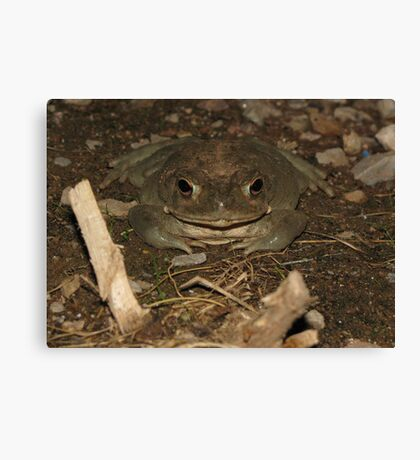 Sonoran Desert Toad (a.k.a Colorado River Toad) Canvas Print