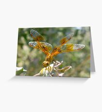 Dragonfly ~ Mexican Amberwing (Female) Greeting Card