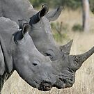 Mom white rhino and adolescent child! by jozi1