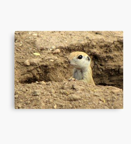 Round-tailed Ground Squirrel ~ Peek-a-boo Canvas Print