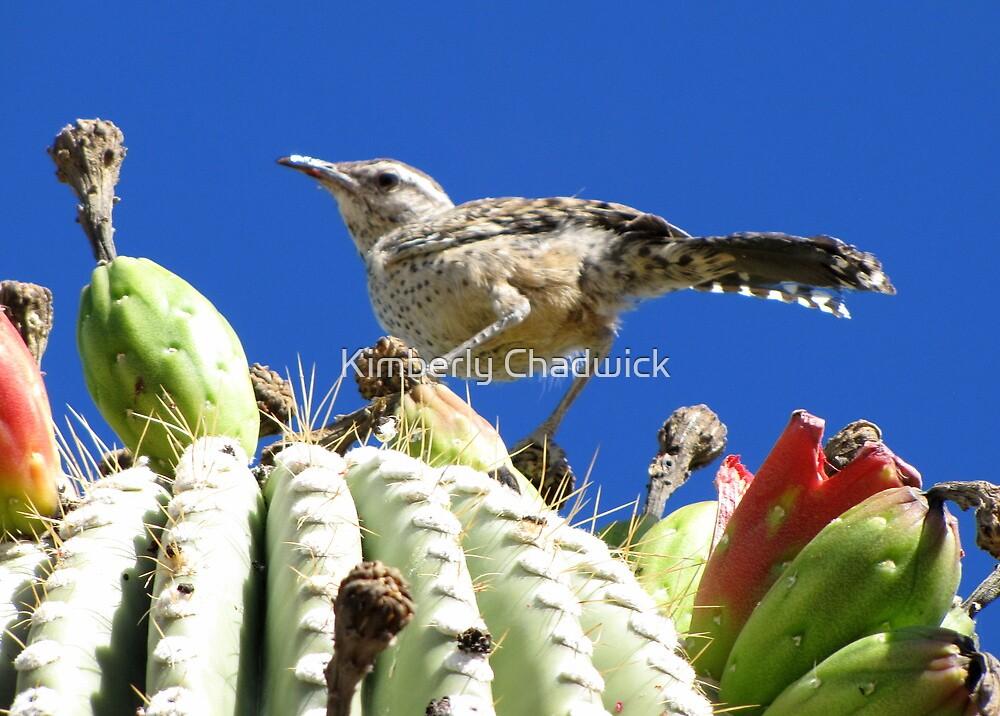 Cactus Wren by Kimberly Chadwick