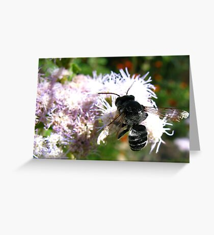 Leafcutter Bee (Megachile) Greeting Card