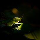 Grasshopper by vasu