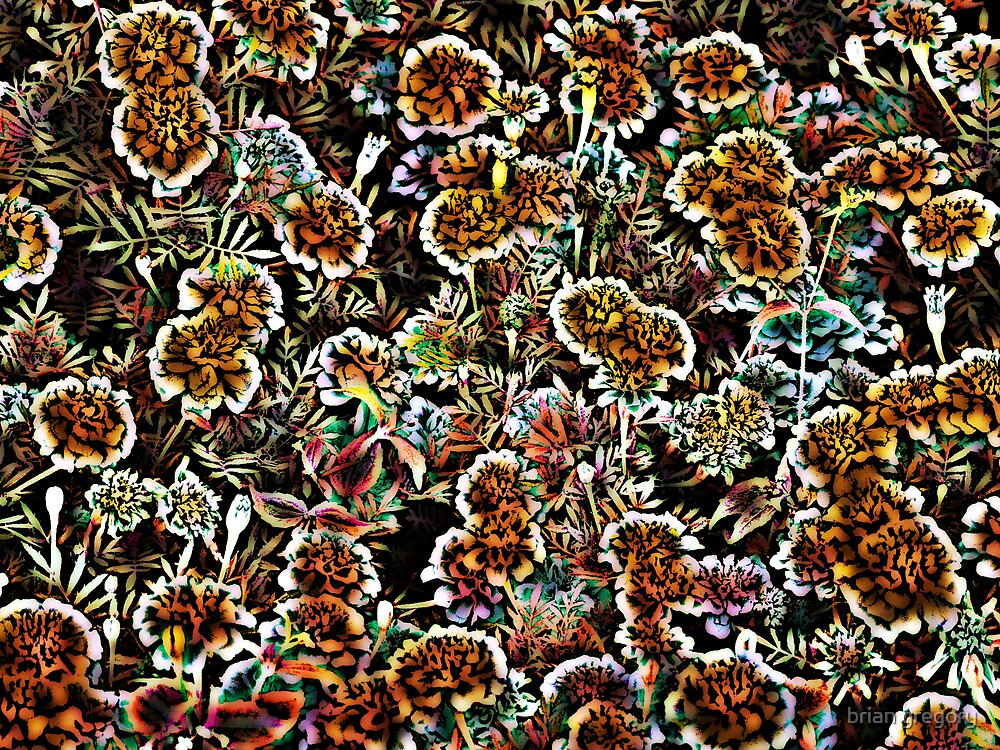 marigolds by brian gregory