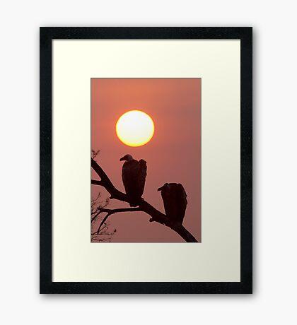 Vulture Sunset Framed Print