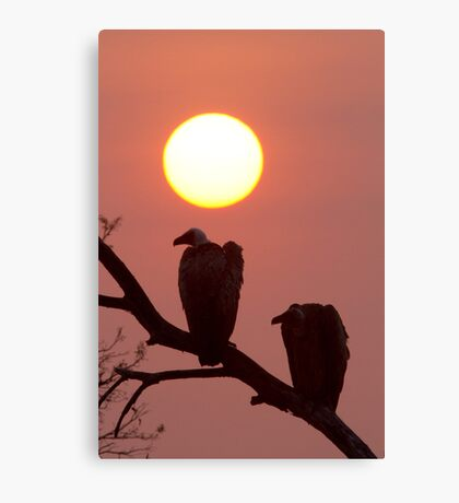 Vulture Sunset Canvas Print