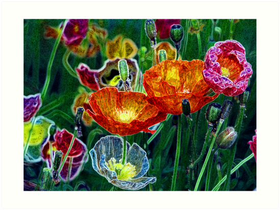 poppies, poppies, poppies by brian gregory