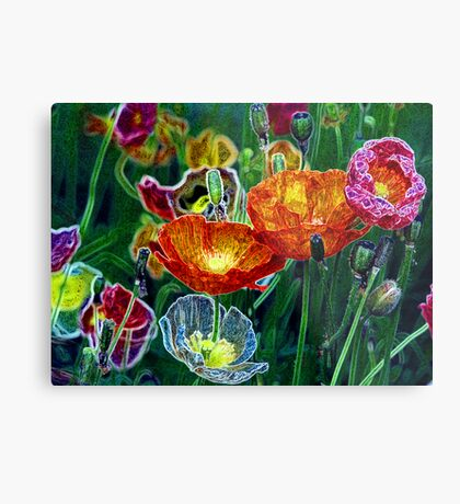 poppies, poppies, poppies Metal Print