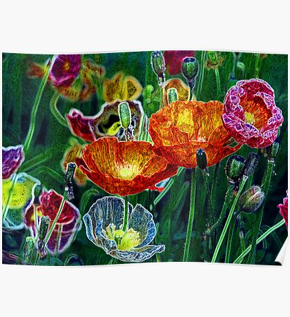 poppies, poppies, poppies Poster