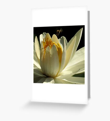 Pond Treasures ~ Part Three Greeting Card