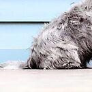 Chilli Bum by Bec  Brindley