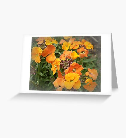Wallflower - Winter Joy Greeting Card