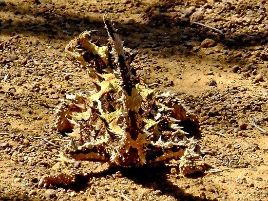 Thorny Mountain Devil - Mount Matilda, Western Australia by Karen Stackpole
