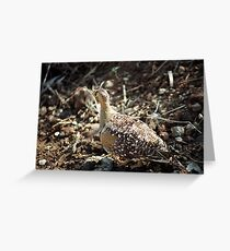 Double Banded Sand Grouse Greeting Card