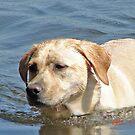 Daisi swimming by joefleis
