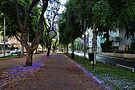 a purple spring foliage, Tel Aviv by Ronsho