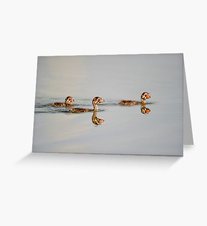 Three little grebes Greeting Card