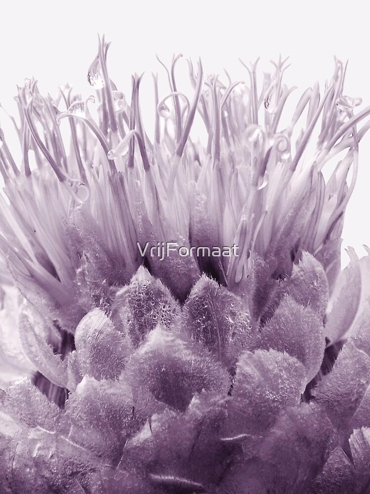 Monochrome - Centaurea by VrijFormaat