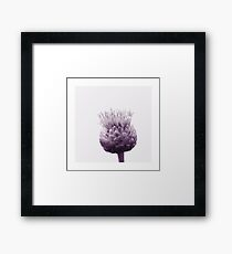 Monochrome - Centaurea Framed Print