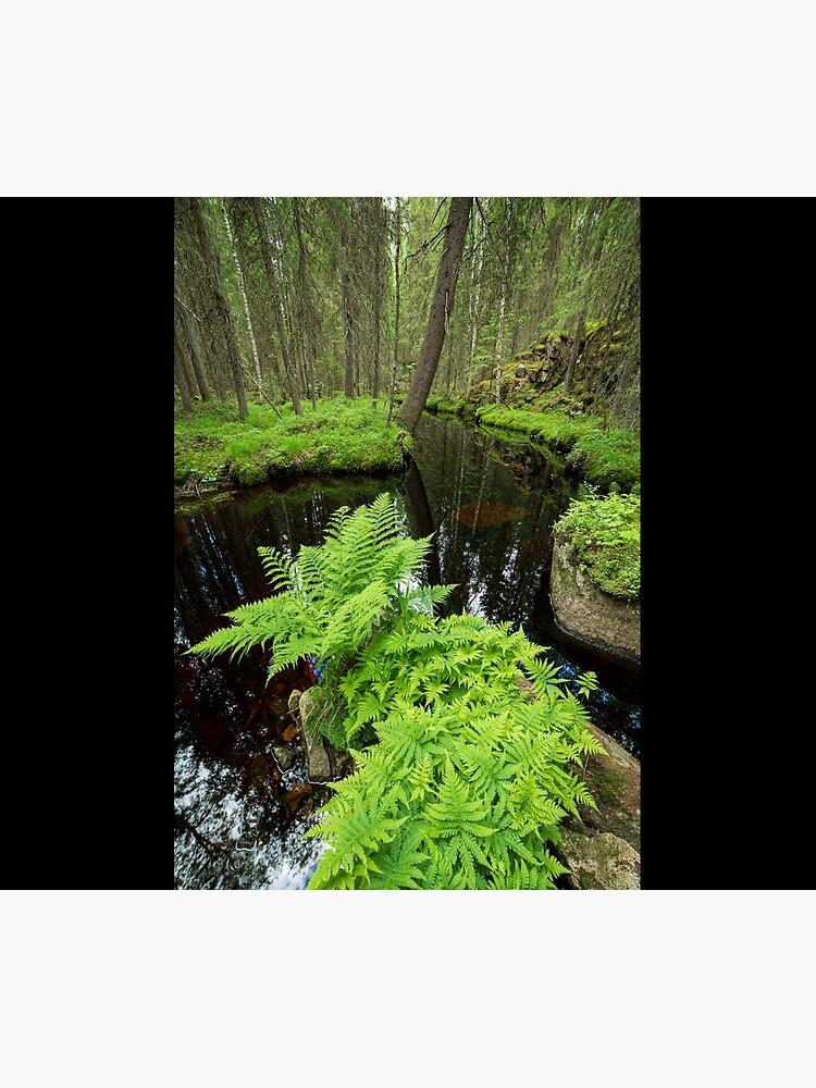 Fern in the forest creek landscape by Juhku