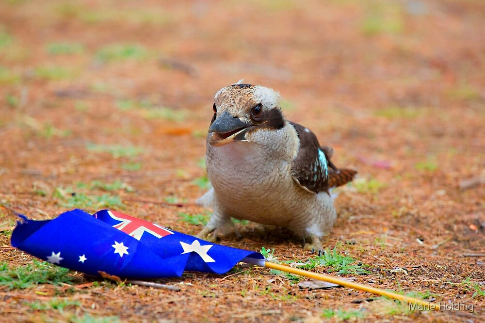 Laughing Kookaburra with the Australia Flag by Marie Holding