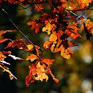 Autumn Leaves by Kerri Farley