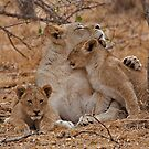 Lioness With Her Cubs by Marie Holding