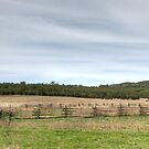The Shearing Shed Panorama - Oxley Downs by GailD