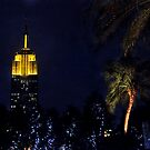 Empire State Palm Trees by deahna