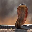 Snouted Cobra by Marie Holding