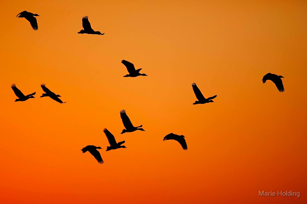 Sunset With The Birds by Marie Holding