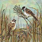 Reed Buntings by lottibrown