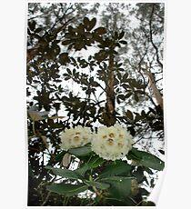Spring in the Dandenongs Poster